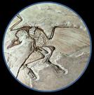 Ptherodactyllus.jpg 1