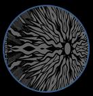 sol gris.jpg 1